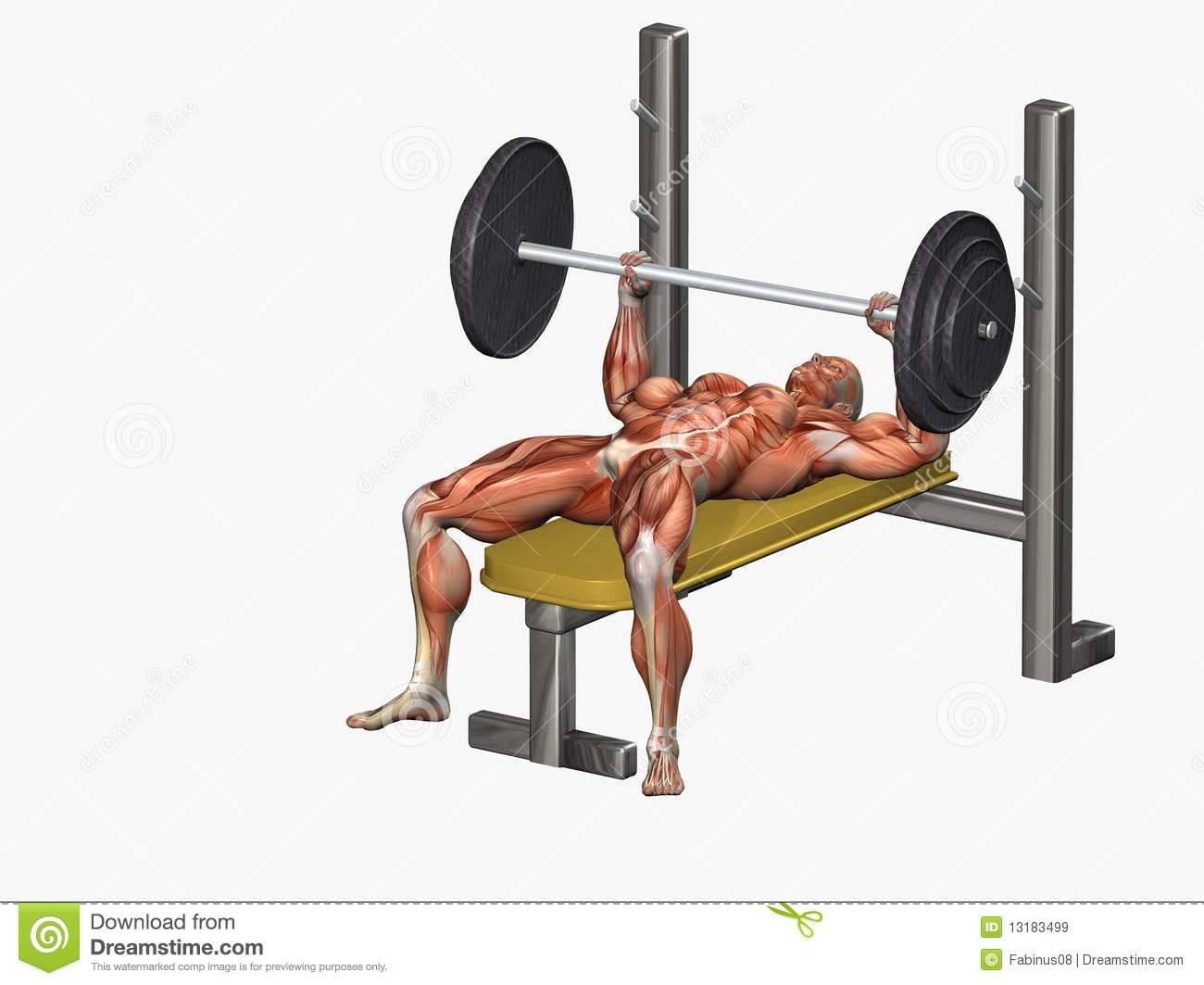 Royalty Free Stock Images Bench Press Image 13183499