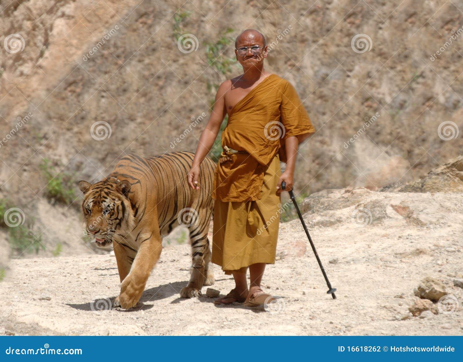 Bengal buddyjskiego michaelita Thailand tygrysa odprowadzenie