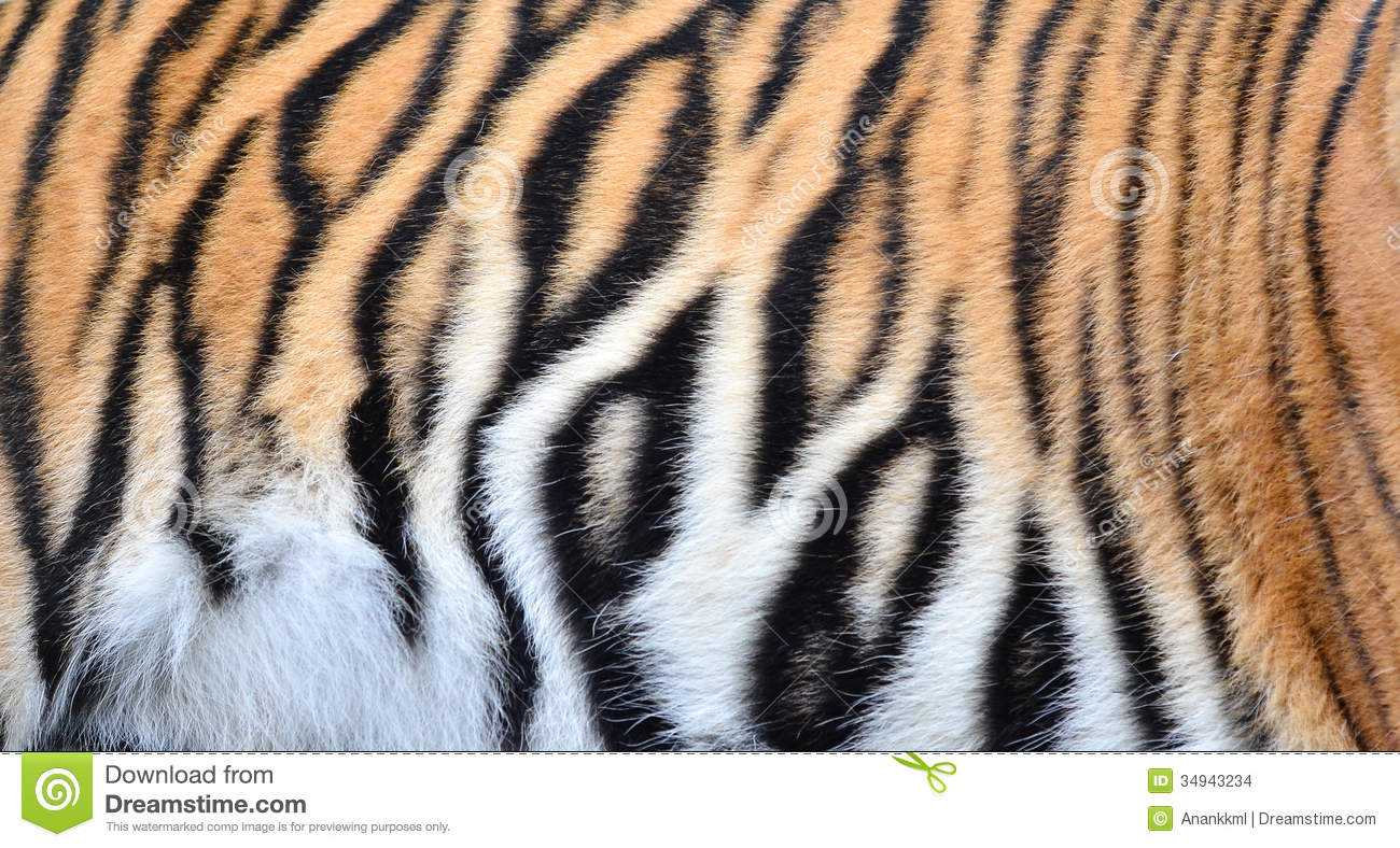 The gallery for --> White Tiger Fur Texture