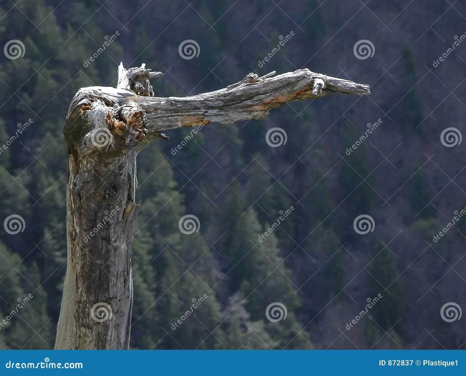 Bent niewygładzony drzewo