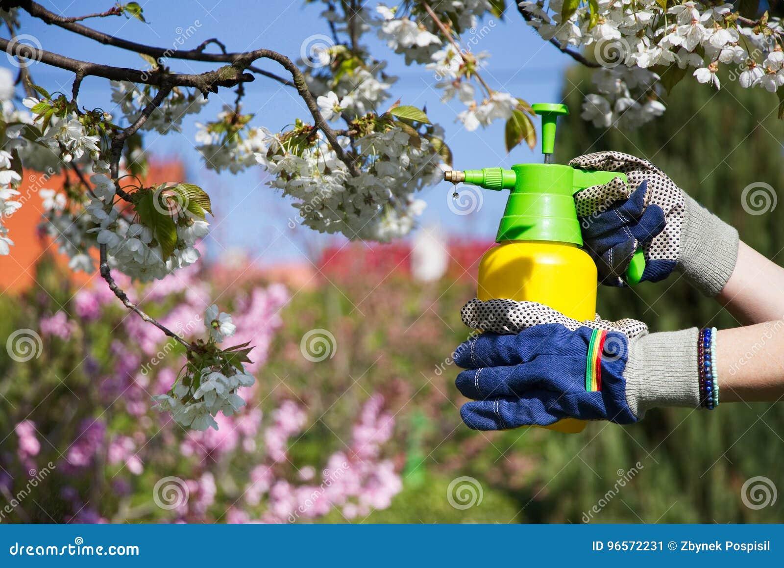Benutzen Sie Handsprüher mit Schädlingsbekämpfungsmitteln im Garten
