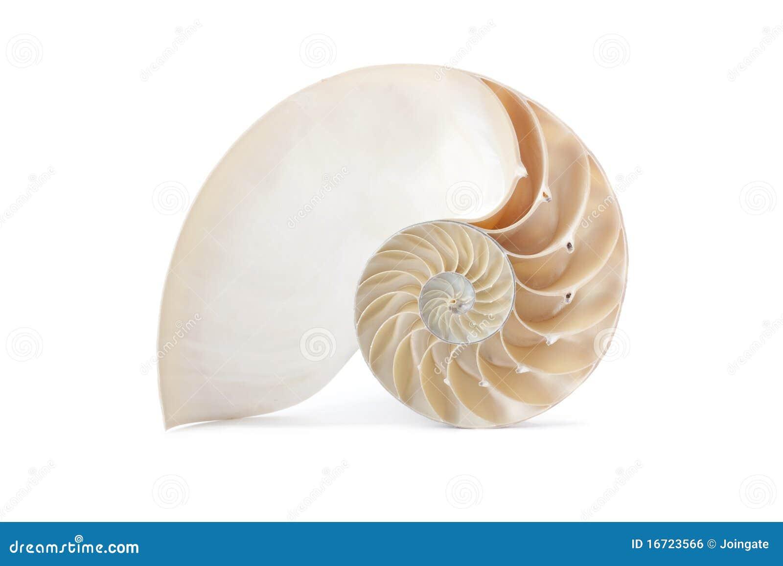 Berömdt geometriskt nautilusmodellskal