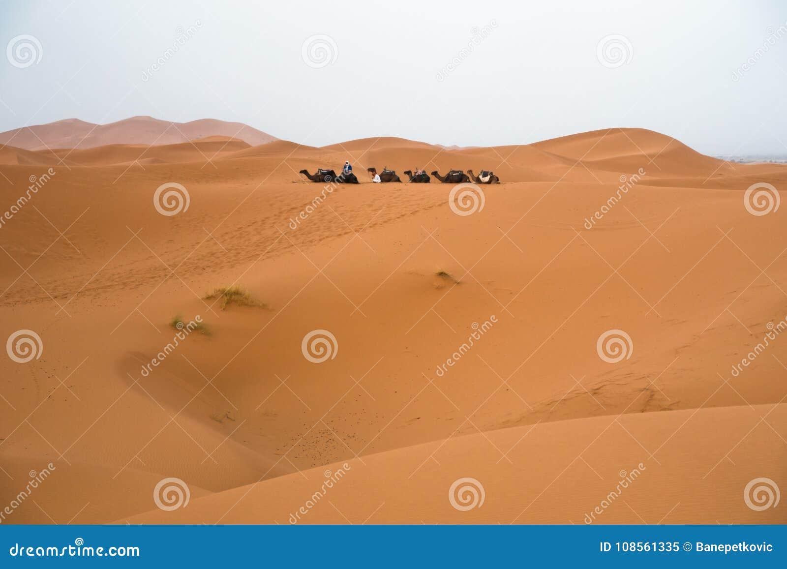 Berberkamelhusvagn i erget Cheggi för soluppgång, Sahara öken, Marocko