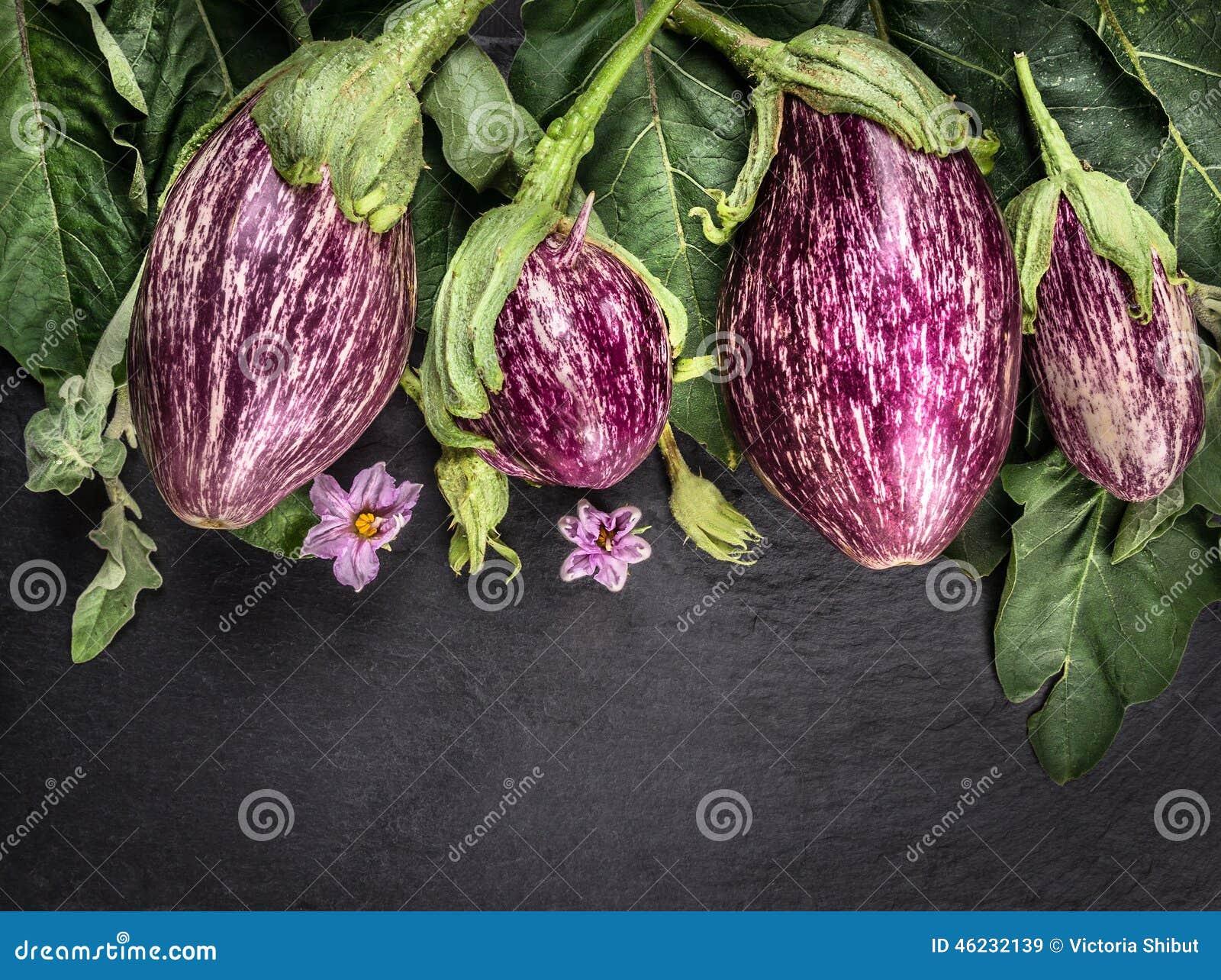 Berenjenas rayadas maduras con las hojas y las flores en la tabla oscura de la pizarra