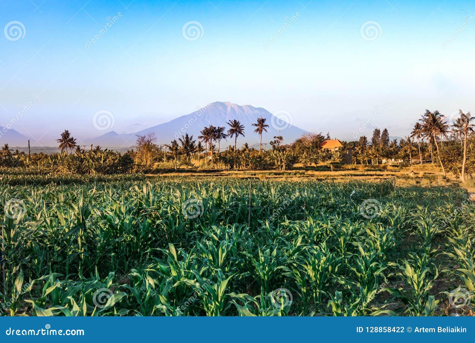 Berg Agungs-Landschaft Heilige Volcano Agung Bali-Insel
