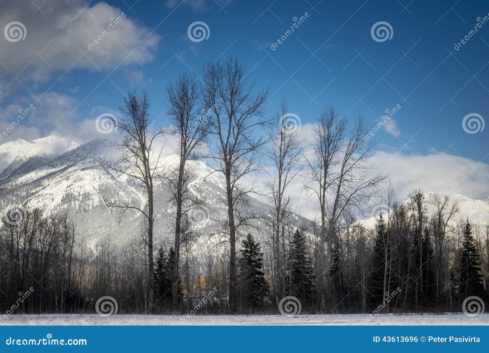 Berg i Fernie, British Columbia