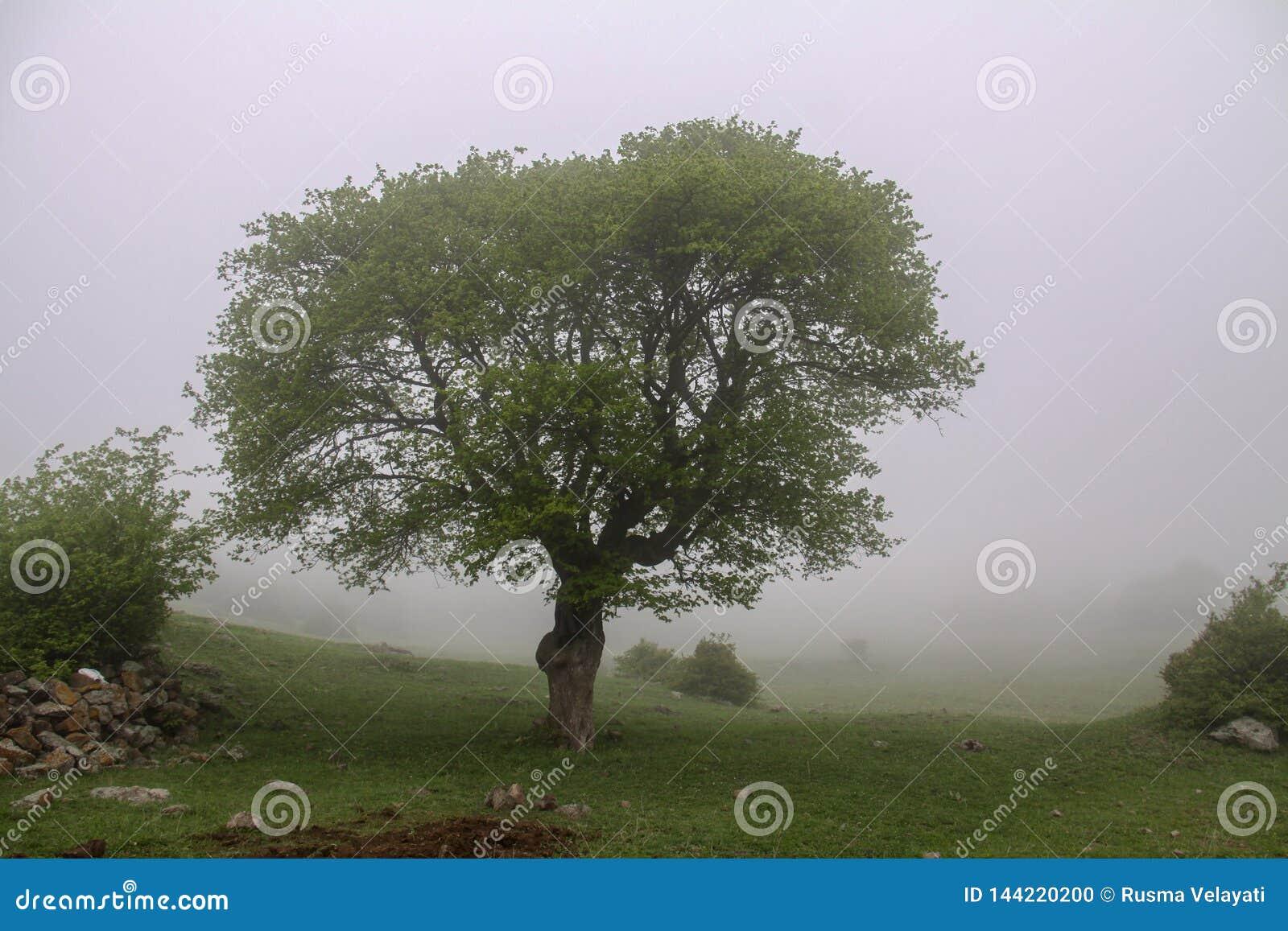 Berg am Nebel, am Nebel und am Baum der Iran, Gilan, Rasht