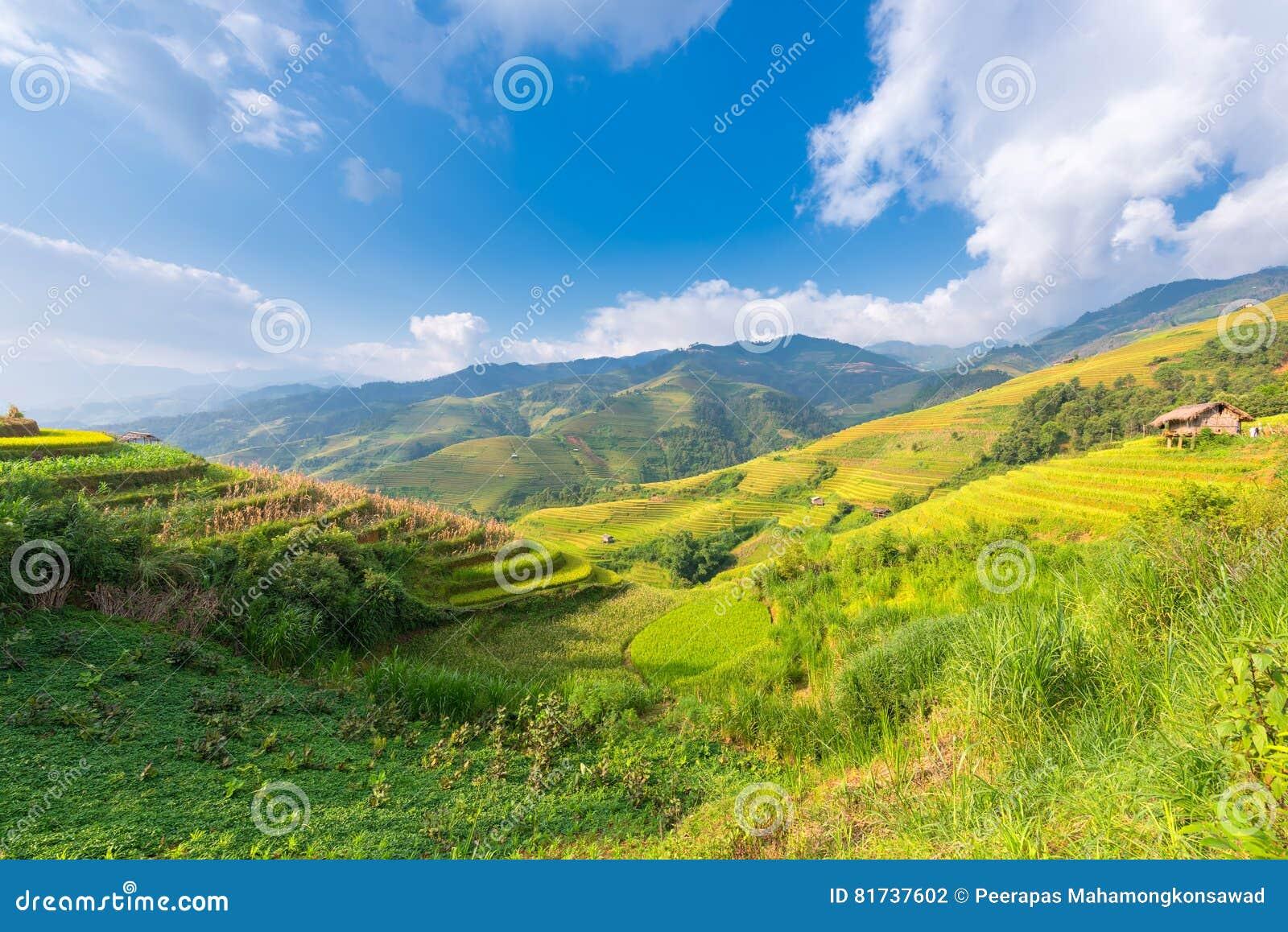 Berg und Natur in der Reisterrasse von Vietnam gestalten landschaftlich
