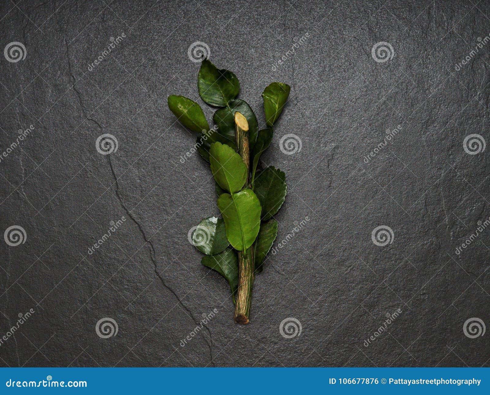 Bergamot, kaffir lime and kaffir lime leaf with branch on dark background