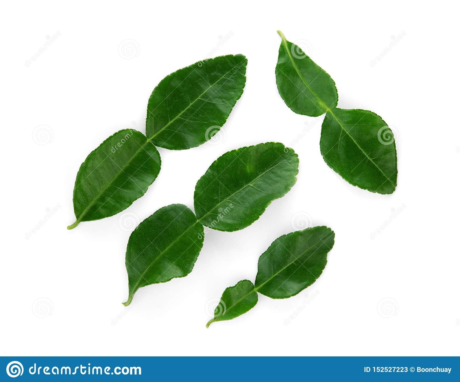 Bergamot leaf isolated on white background, top view
