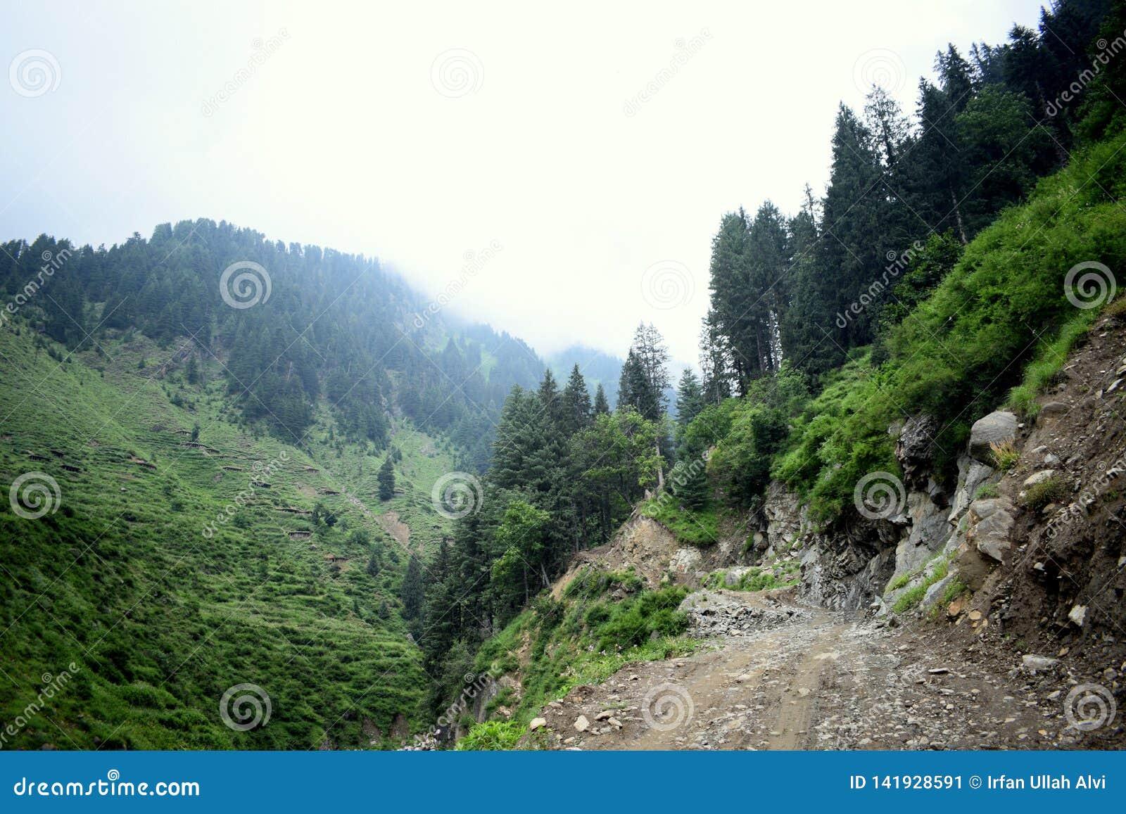 Berge bedeckten grünes Gras, schönen Weg, grüne Bäume und blauen bewölkten Himmel