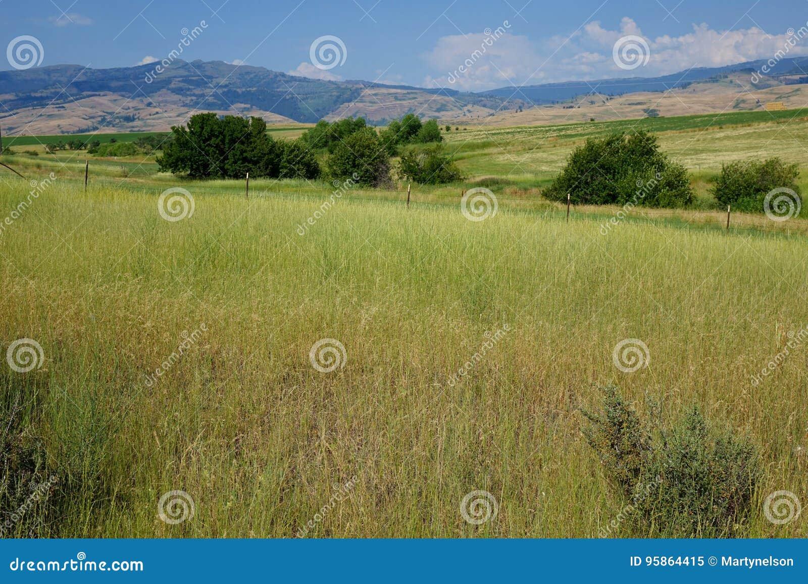 Berge nähern sich MESA, Idaho