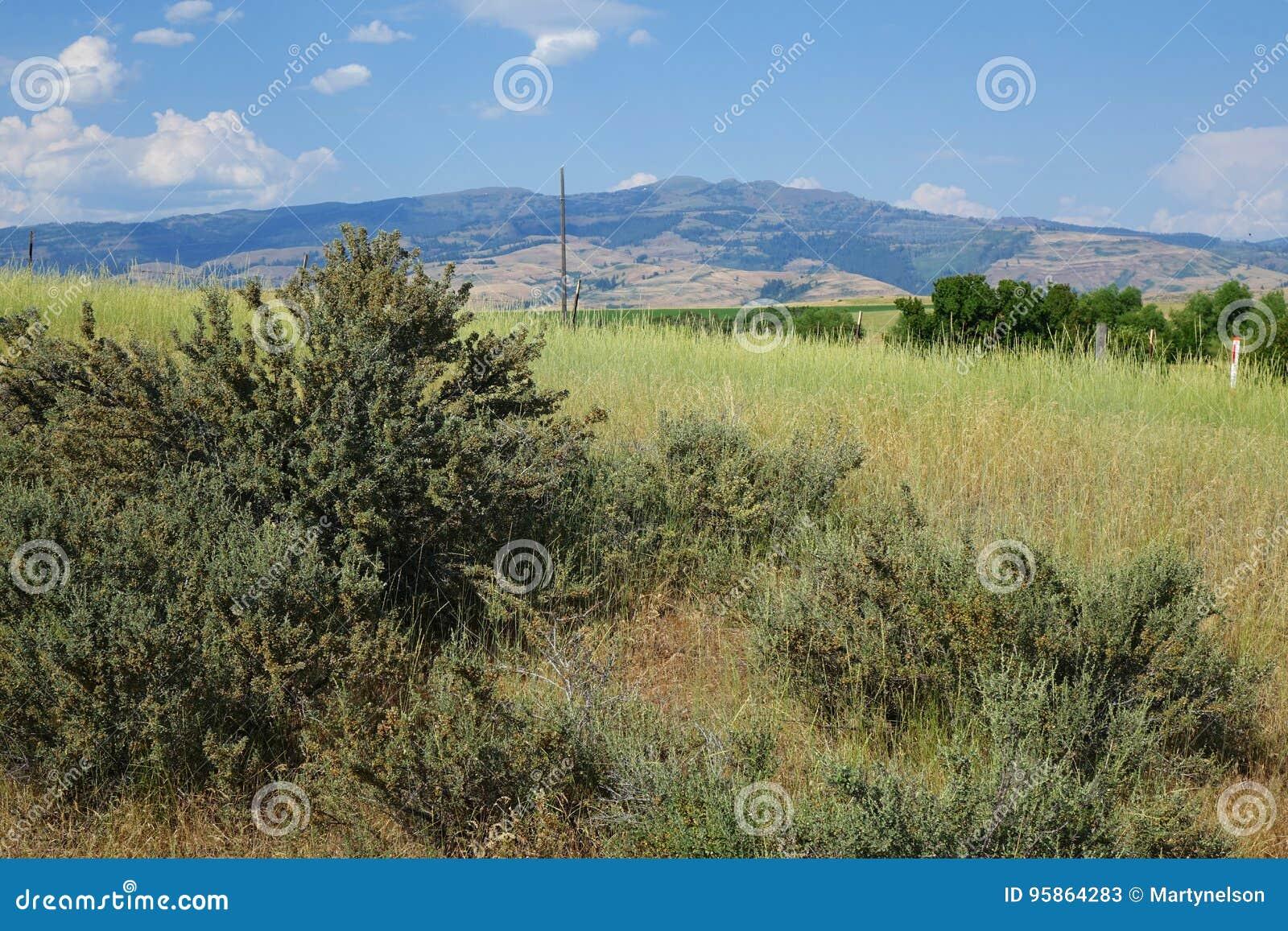 Bergen dichtbij Mesa, Idaho