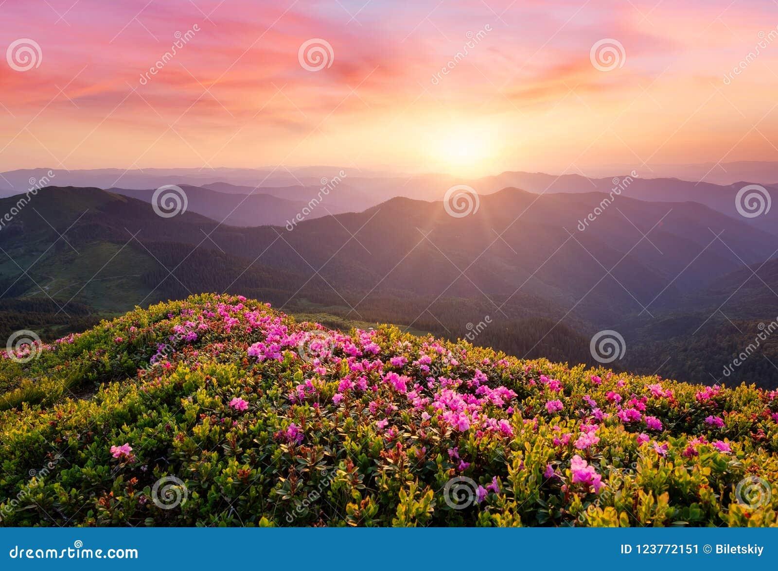 Bergen tijdens bloemenbloesem en zonsopgang