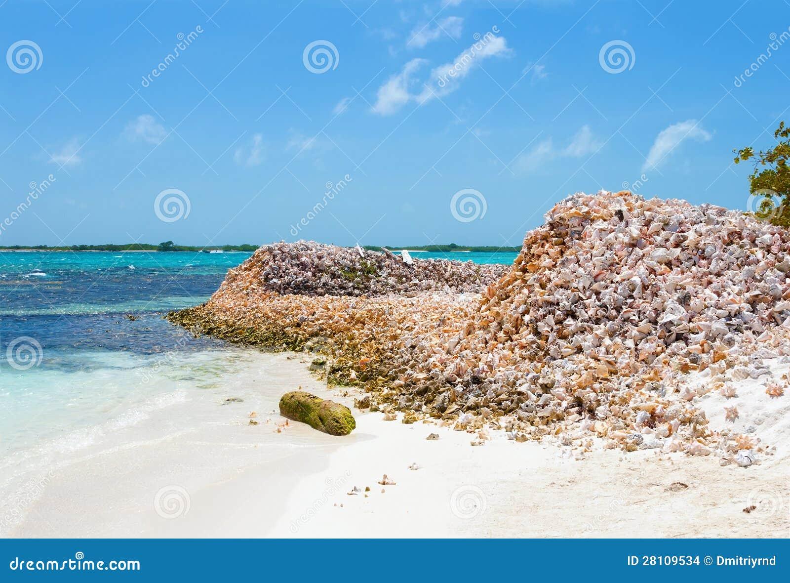 Bergen van shells