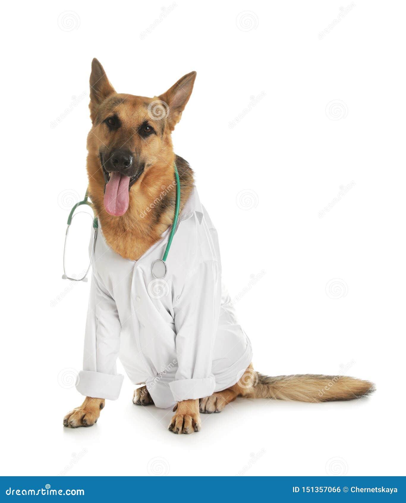 Berger allemand avec le stéthoscope habillé comme Doc. de vétérinaire sur le blanc