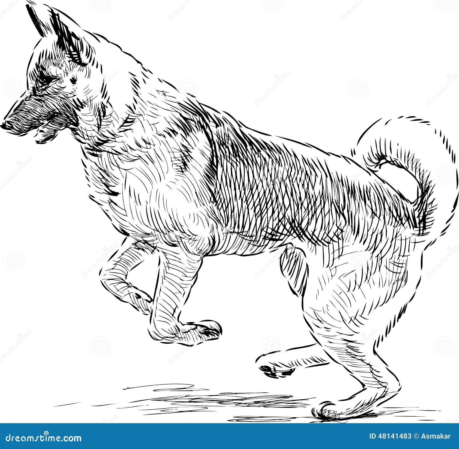 Berger allemand dans un saut illustration de vecteur - Dessin de chien berger allemand ...