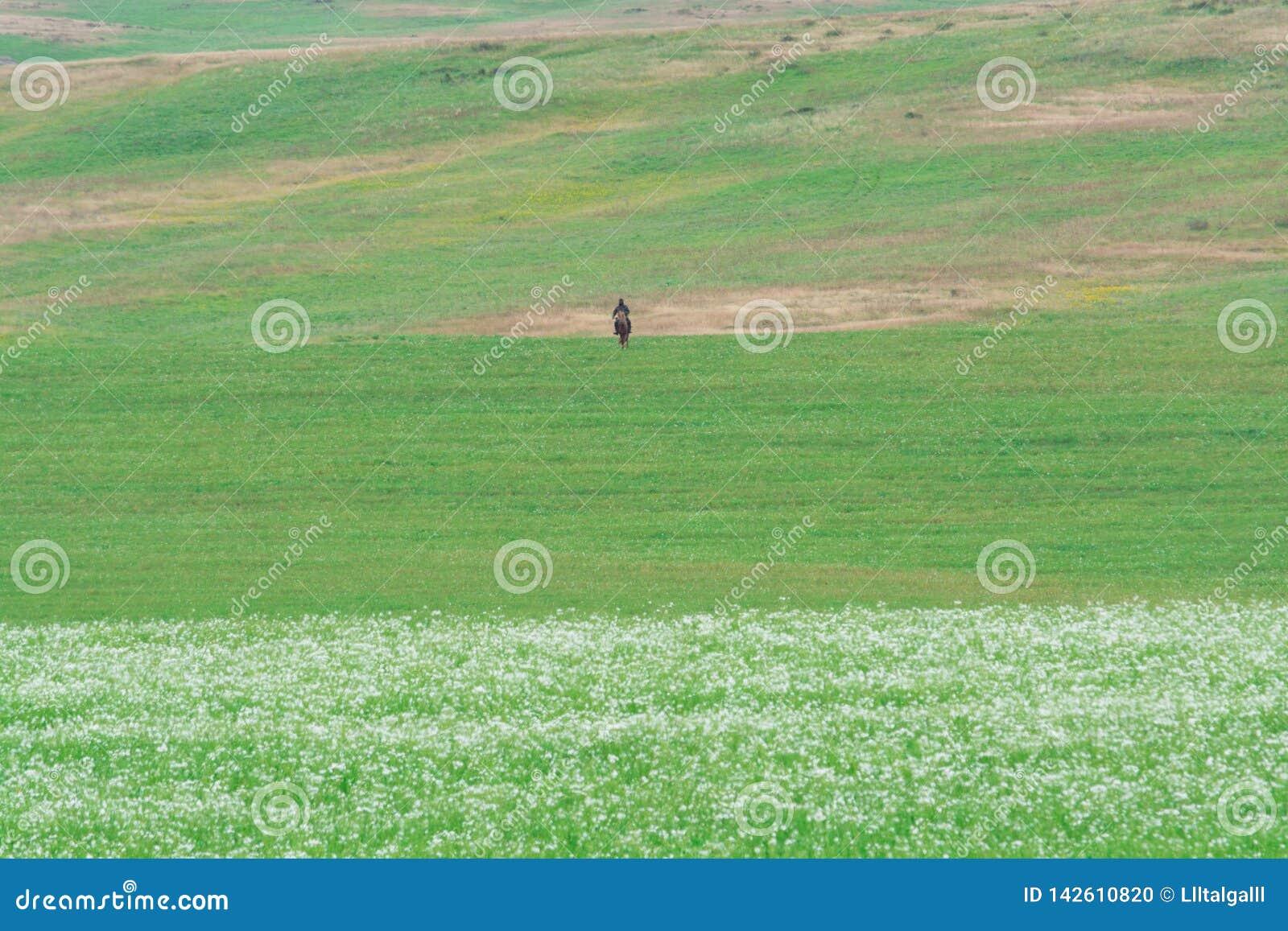 Berger seul sur un cheval Myriades de marguerites blanches C?te verte Saison d ?t?