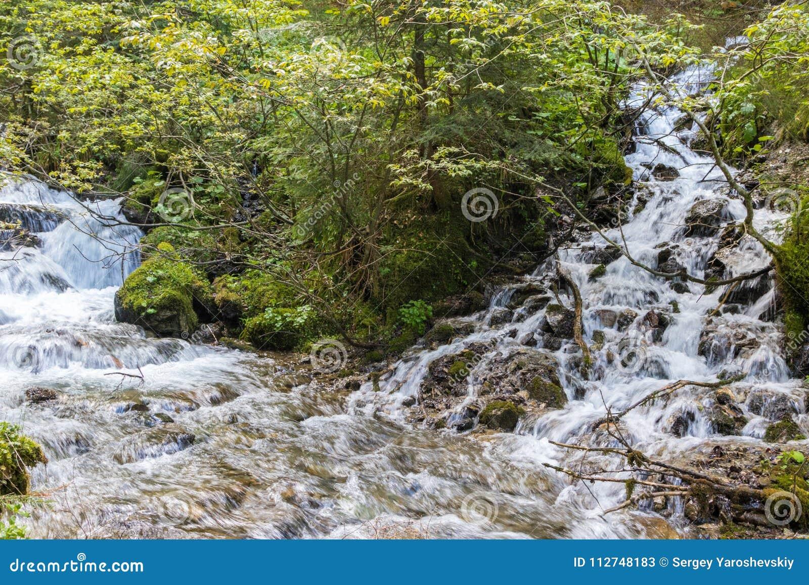 Bergflod i de Carpathian bergen