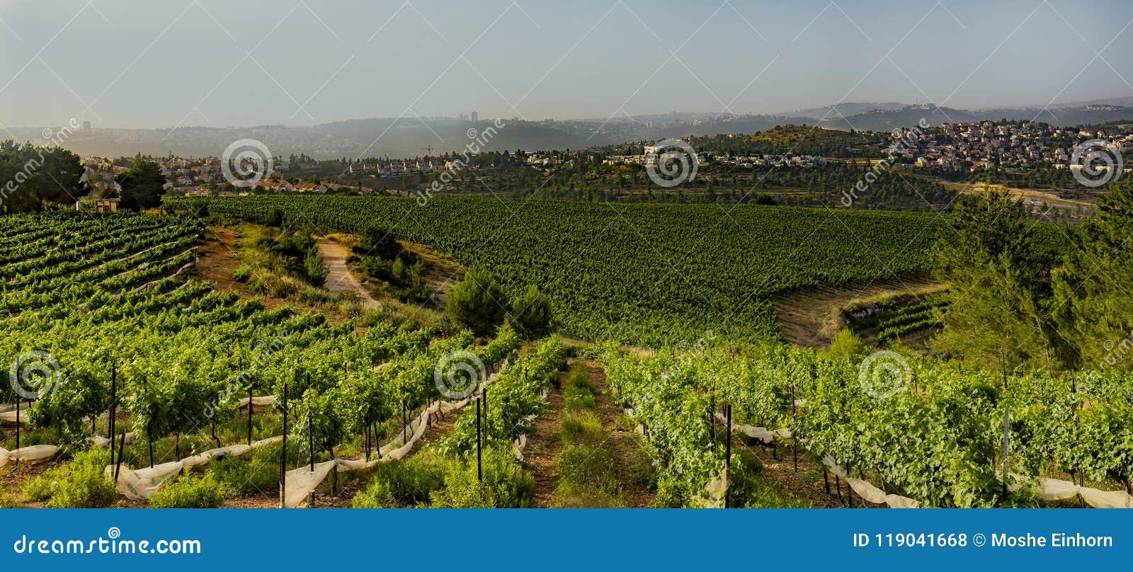Berglandbouw dichtbij Jeruzalem