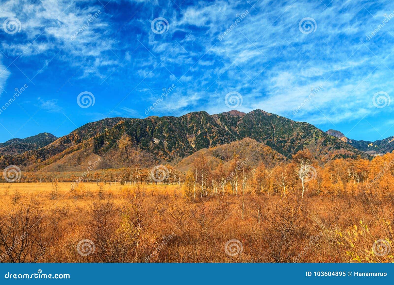 Berglandschap met het bos van de pijnboomboom in de herfstseizoen, Nikko,