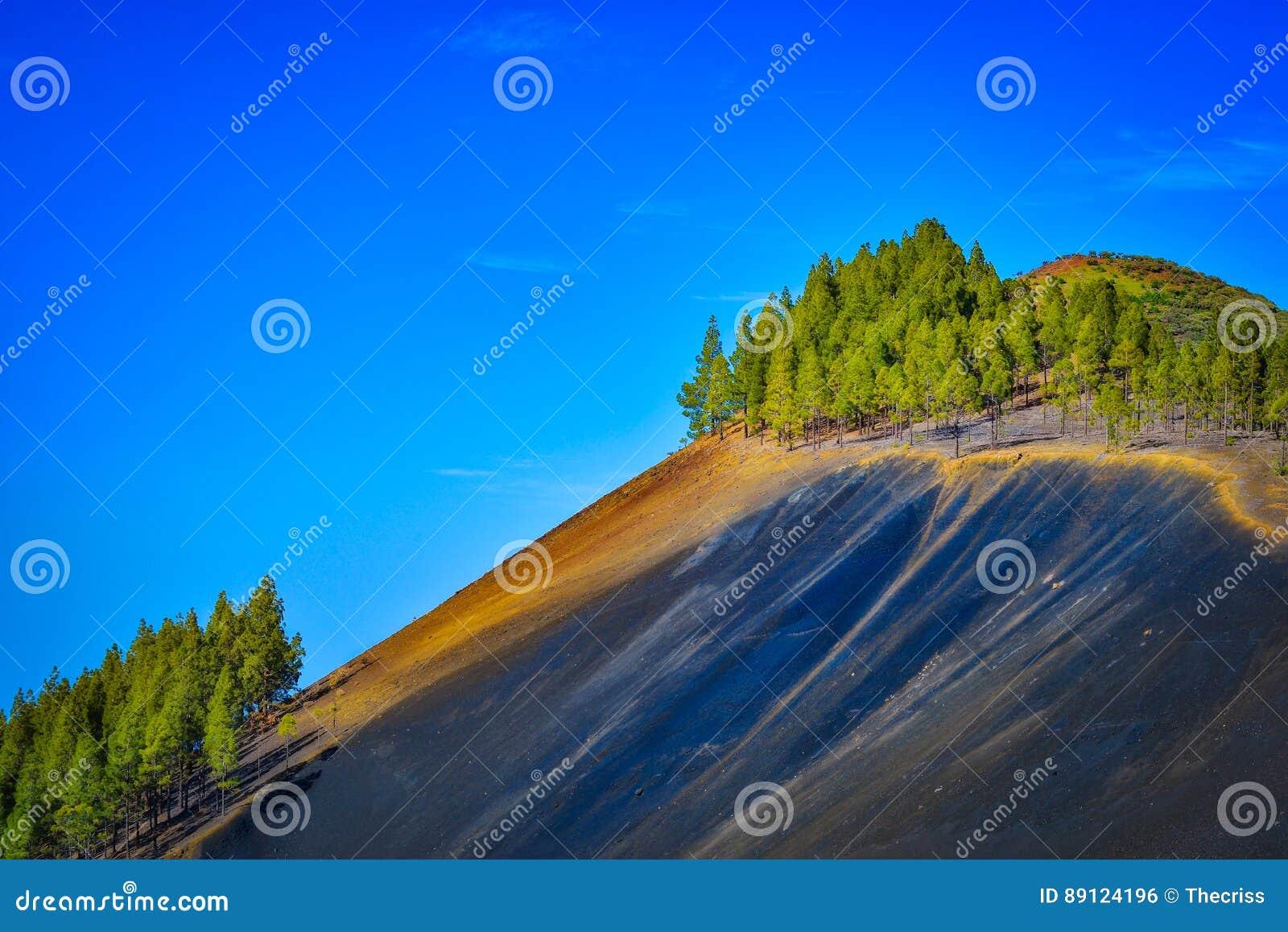 Berglandschap met vulkanische grond en pijnboombomen in het eiland van Gran Canaria, Spanje