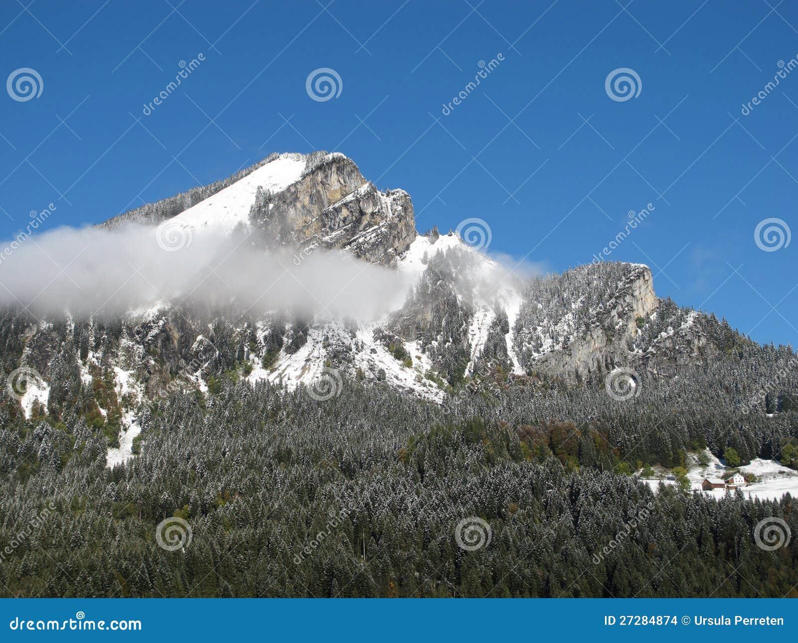 Bergmaximum och skog