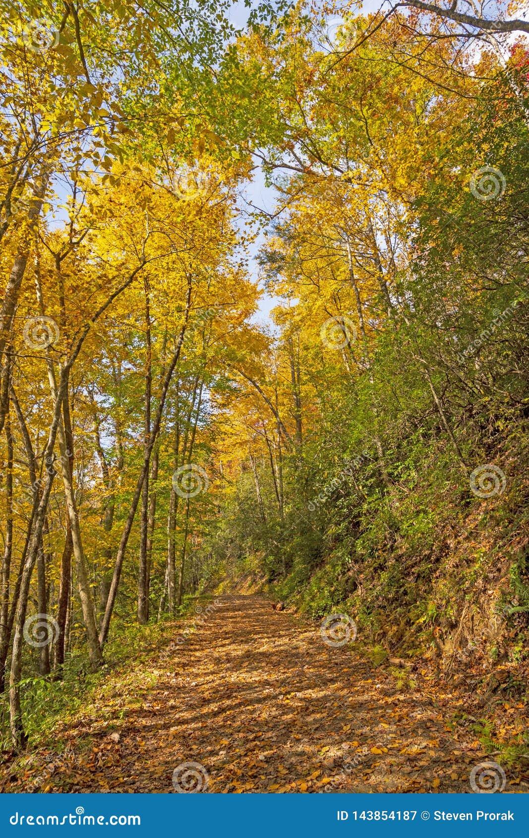 Bergslinga i hösten