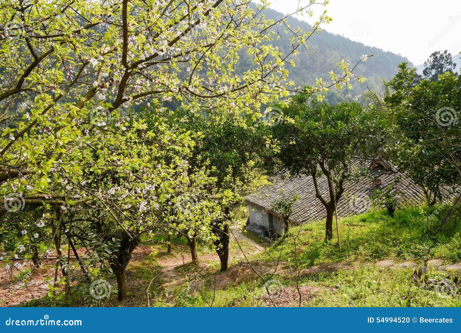 Bergssidalantbrukarhem, i att blomstra våren på middagen