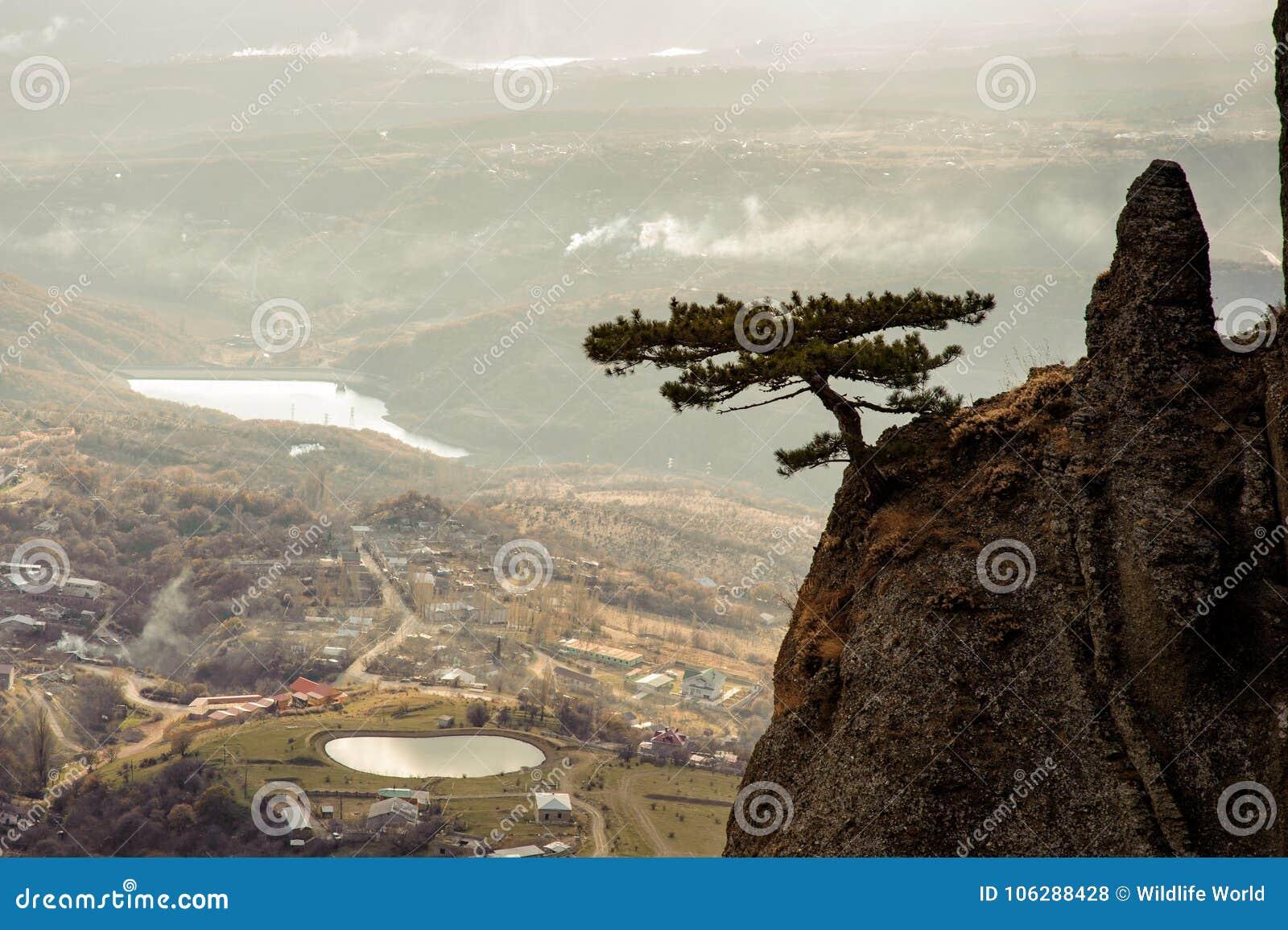 Bergträd på bakgrunden av foothillbyn crimea demerdzhi