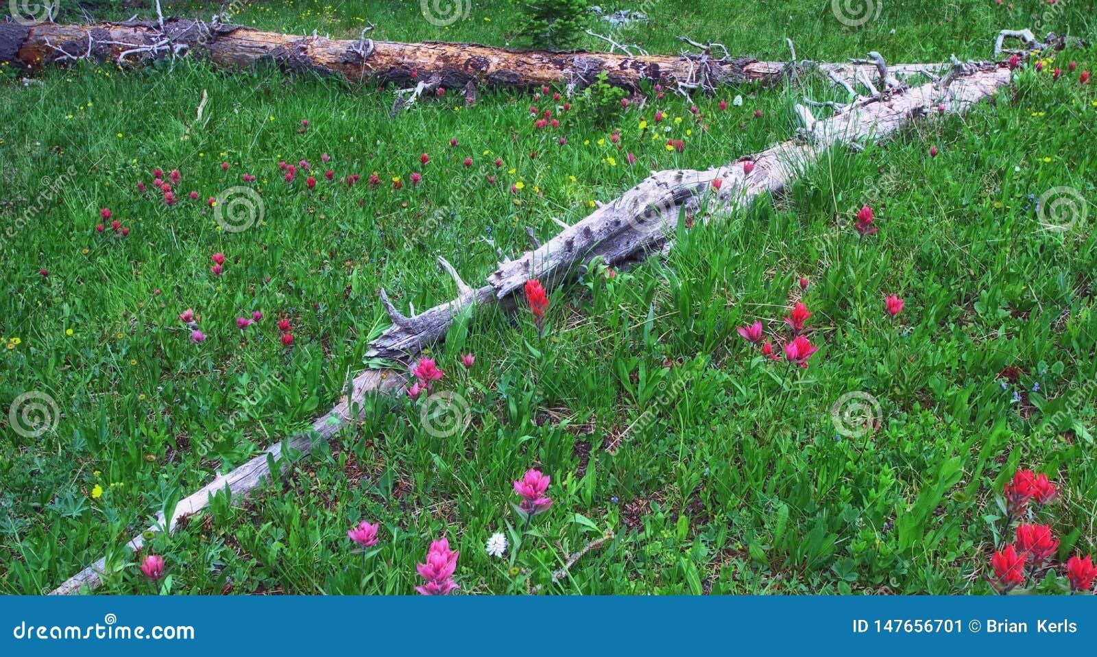 Bergwiese mit Sommer Wildflowers