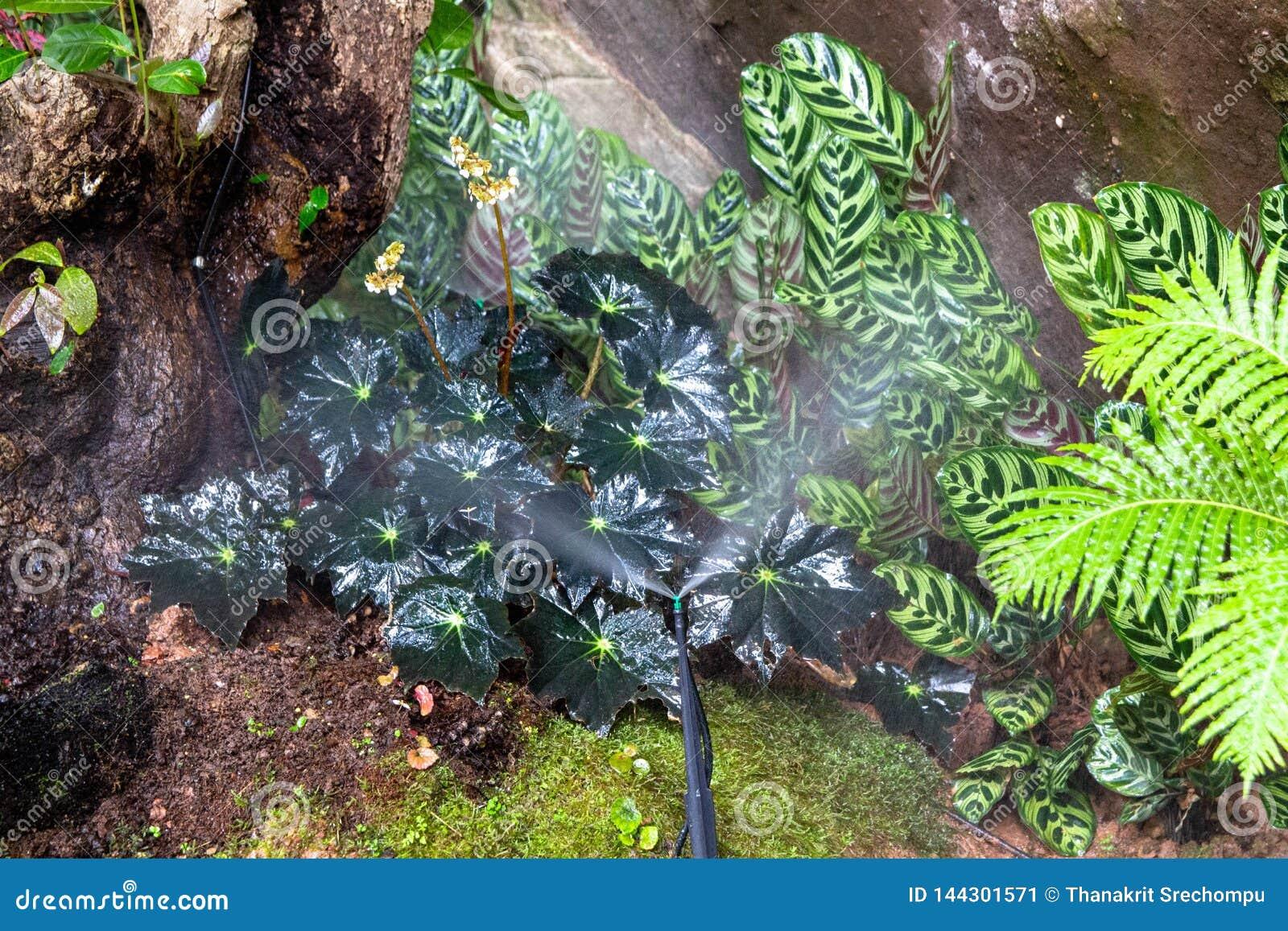 Berieselungsanlagen, die Wasser im Garten besprühen