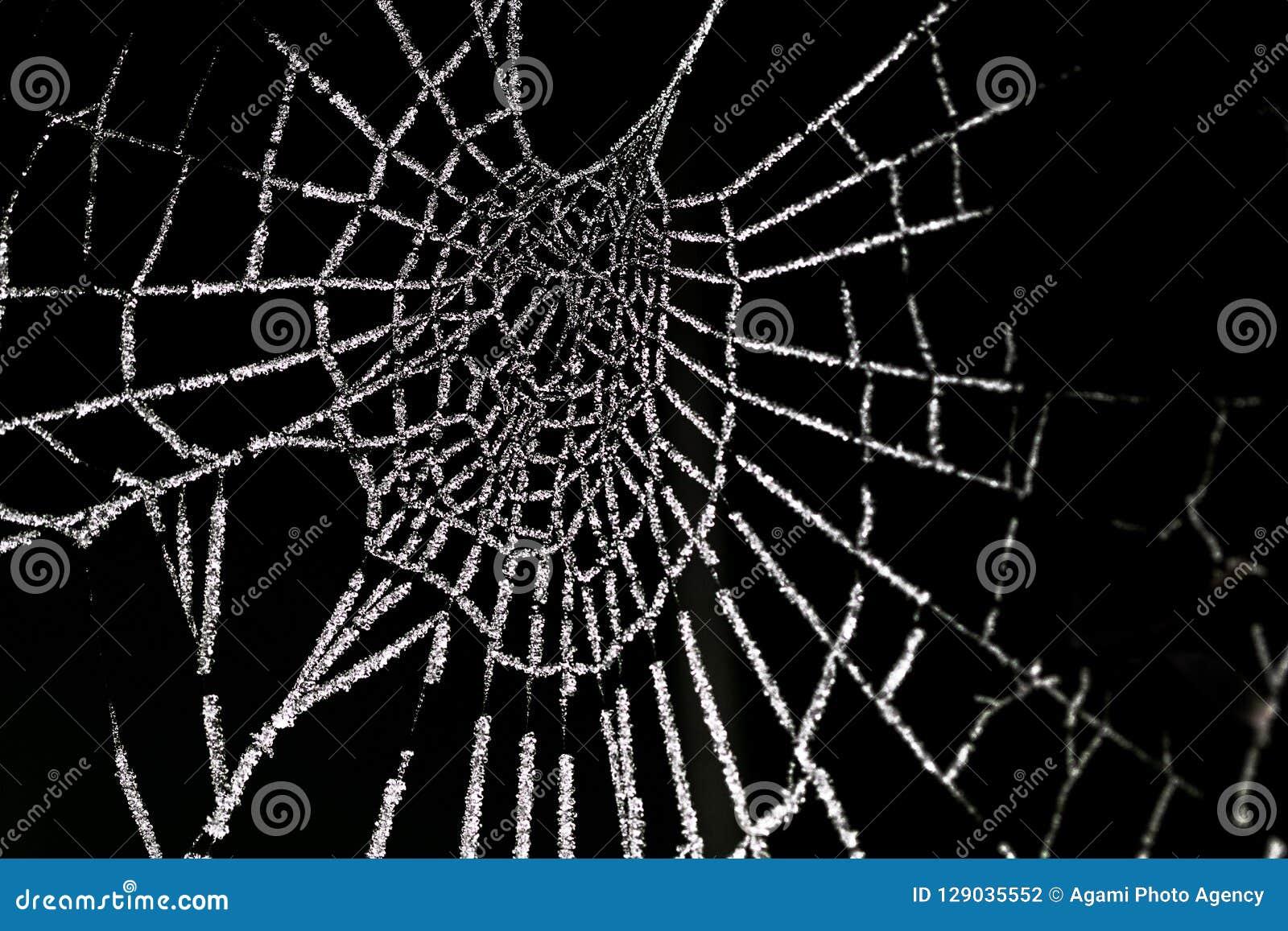 Berijpte-spinnenweb, bereiftes Spinnennetz