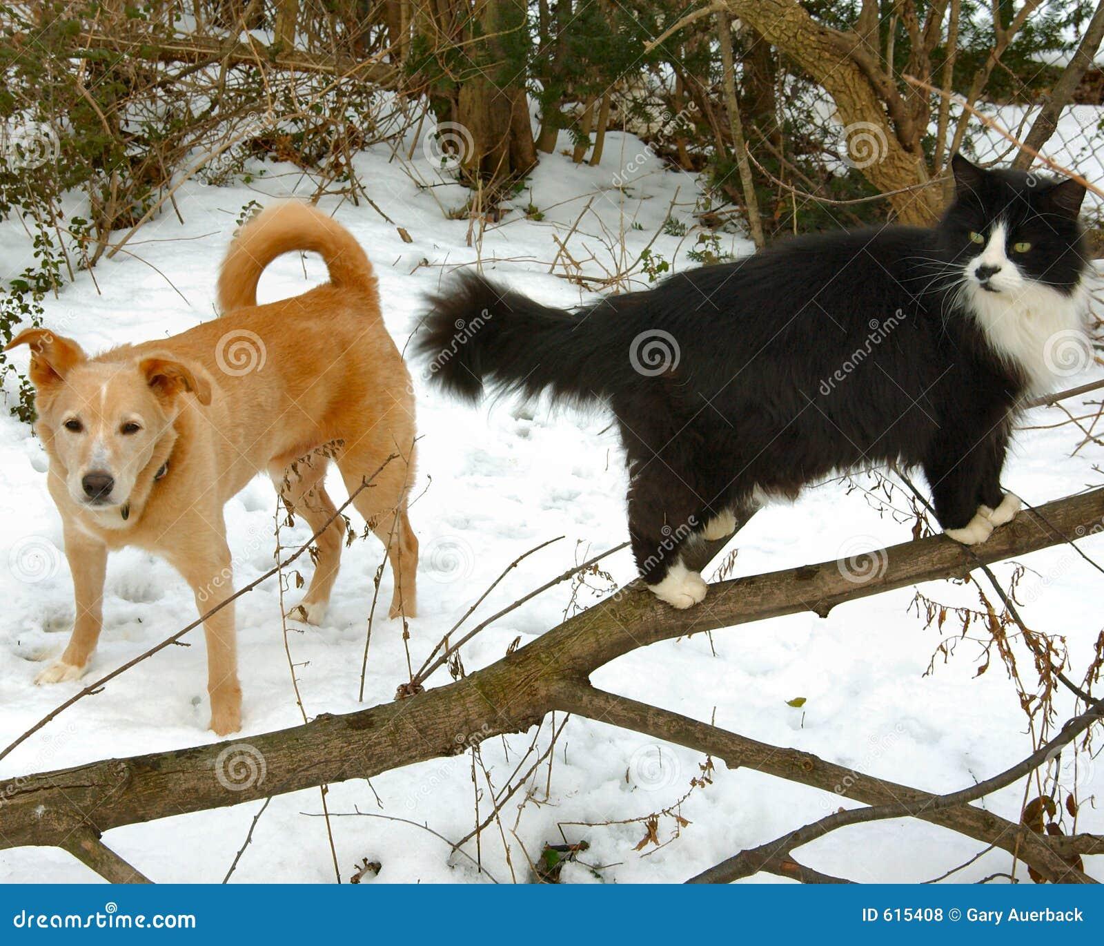 Berk en loodje in sneeuw