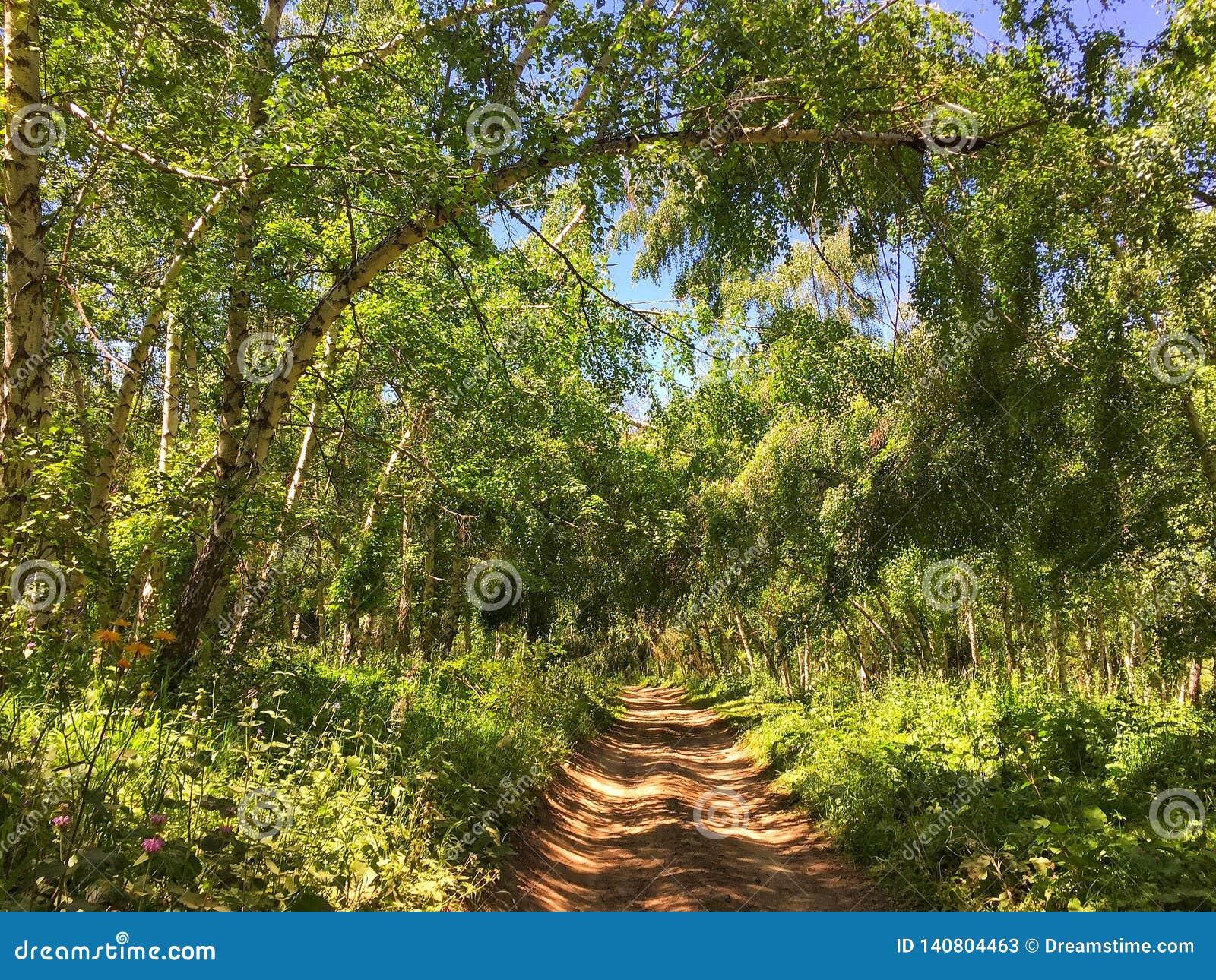 Berk klein bos dichtbij meer Kaindy in Kazachstan