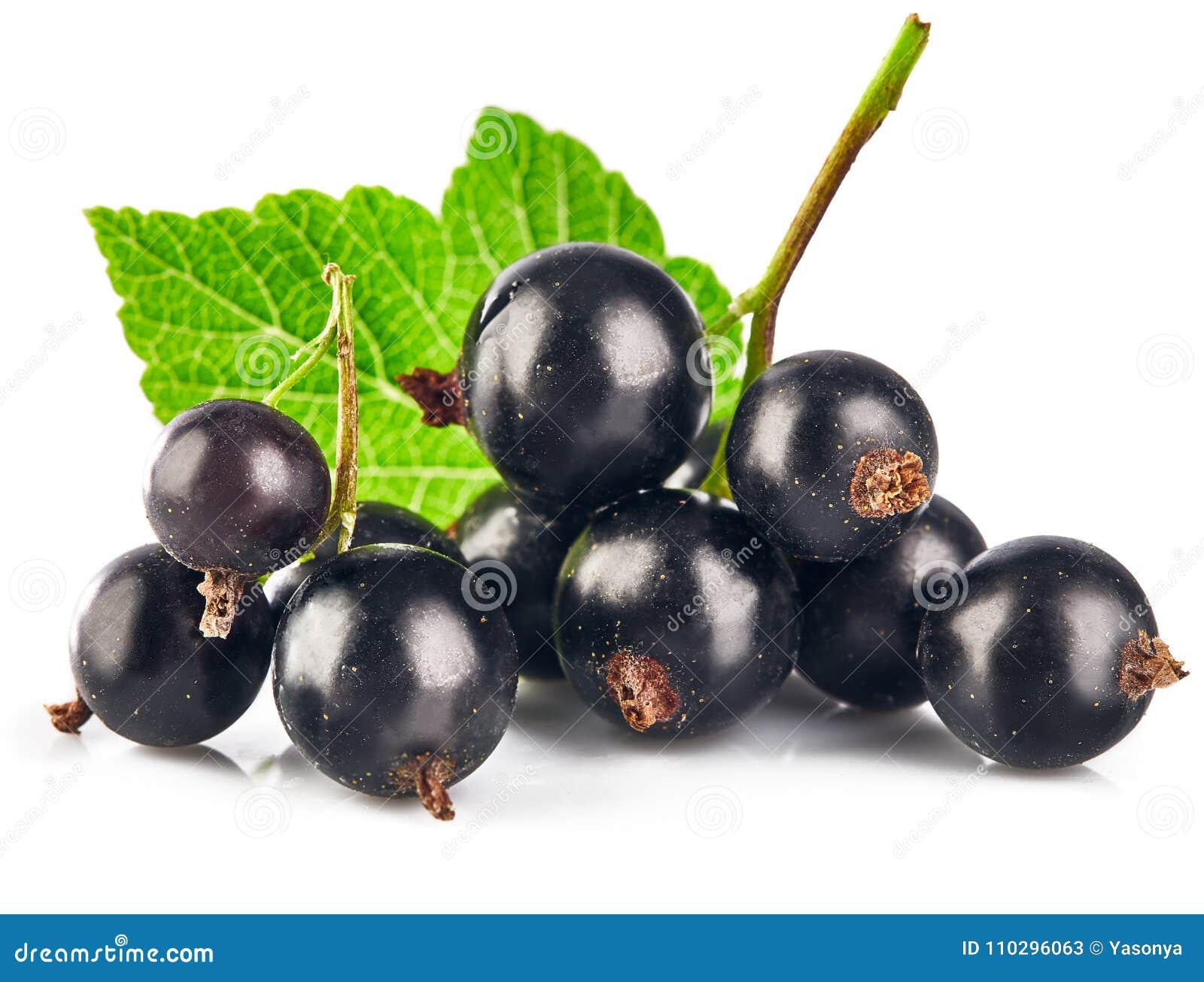 Berries black currant with green leaf fresh