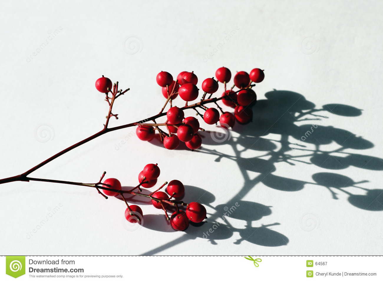 Berries and shadows