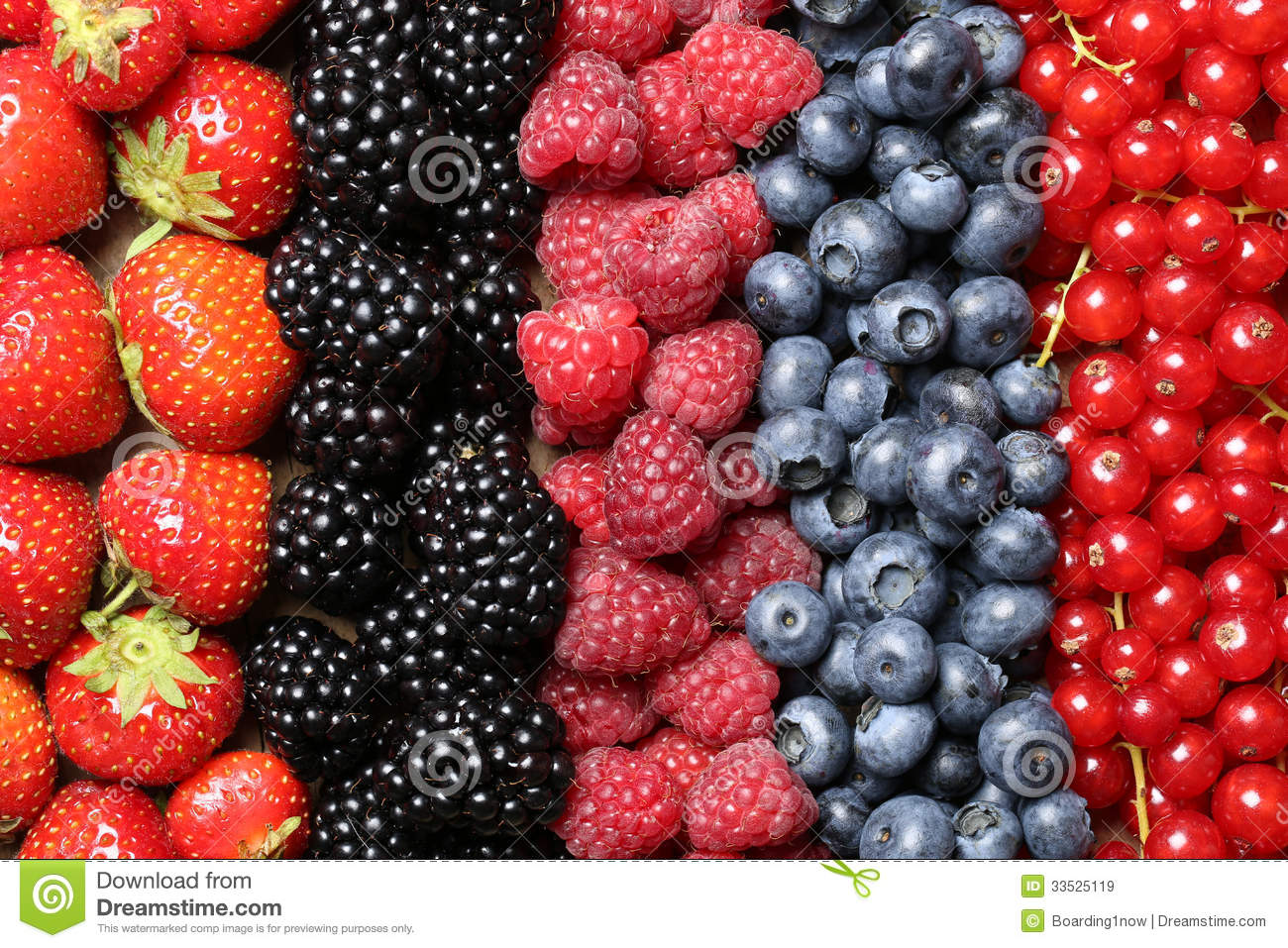 Berry fruits in a row