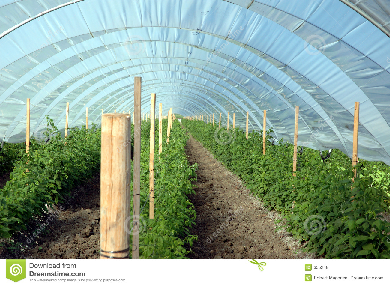 Berry Greenhouse Royalty Free Stock Photos Image 355248