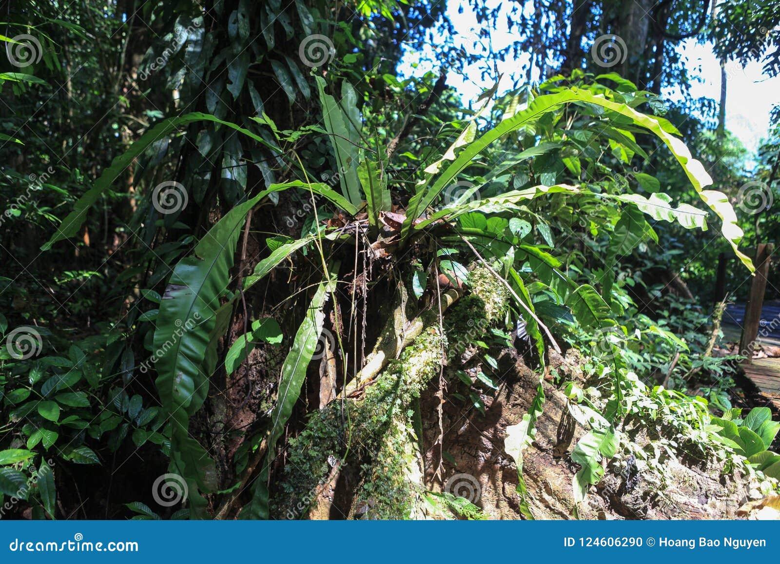 Beschaffenheit Nationalparks Gunung Mulu von Sarawak, Malaysia