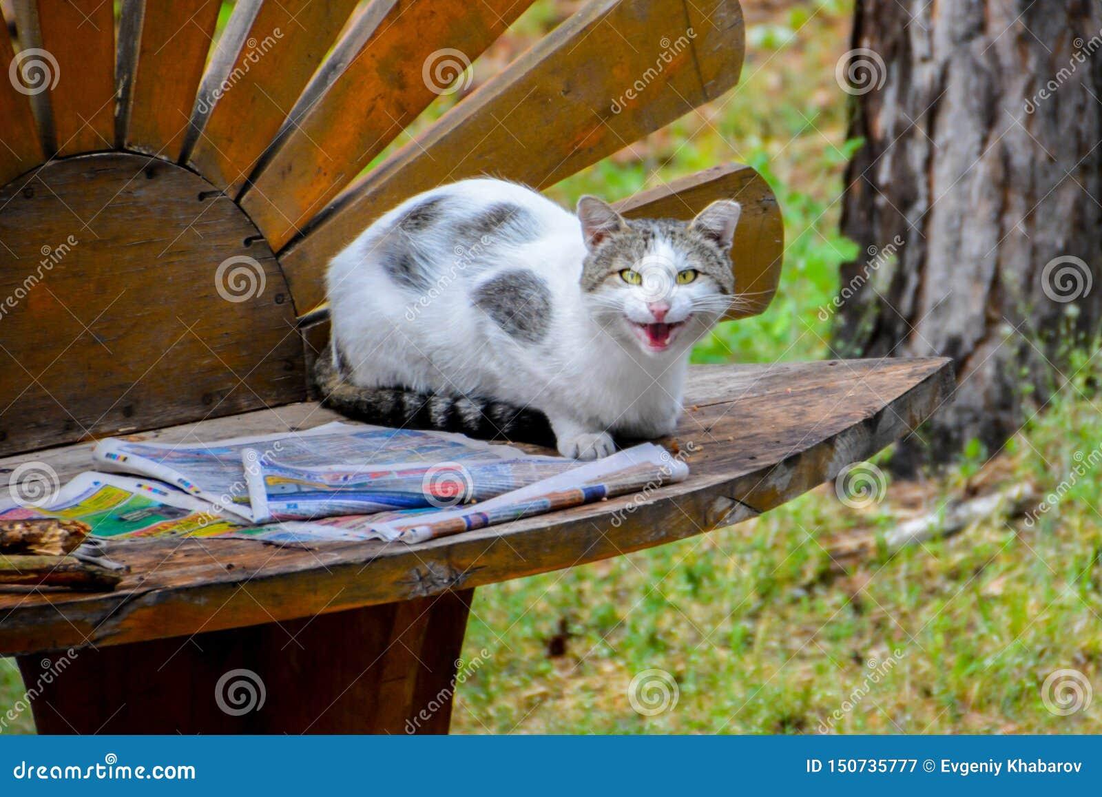 Beschmutzte Katze, die eine Zeitung auf der Bank liest