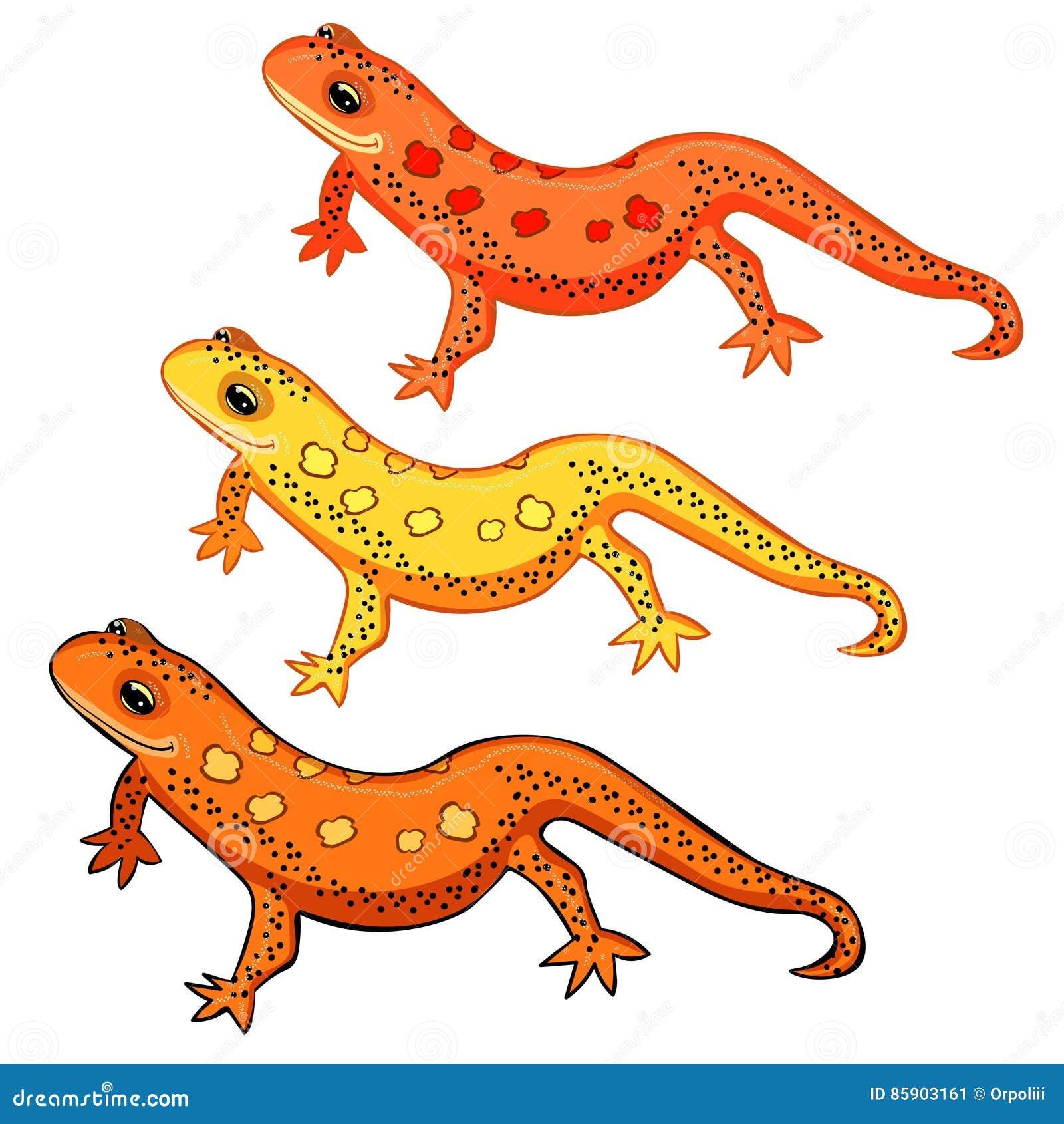 Beschmutztes Salamanderlächeln Tritons nach Osten amerikanisches Rot Vektor