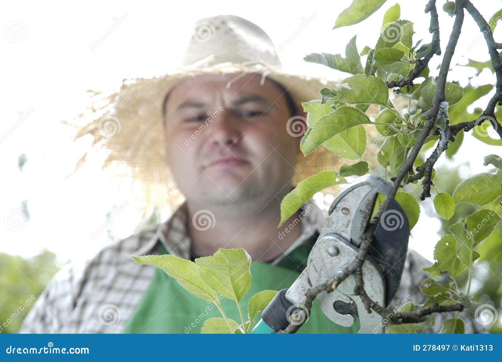 Beskära sax för trädgårdsmästare