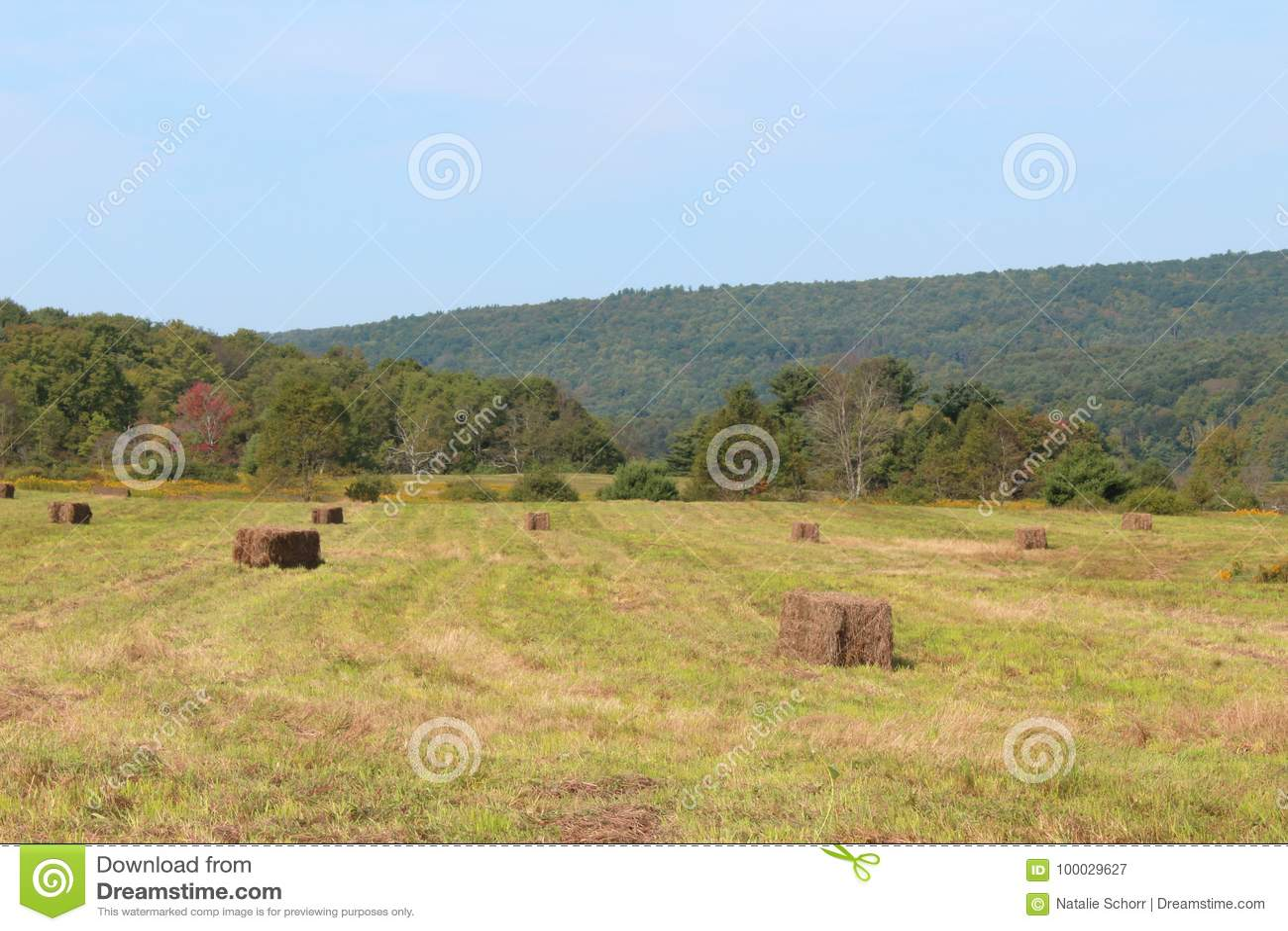 Besnoeiing en in balen verpakt hooi op een gouden gebied met bergen in de afstand