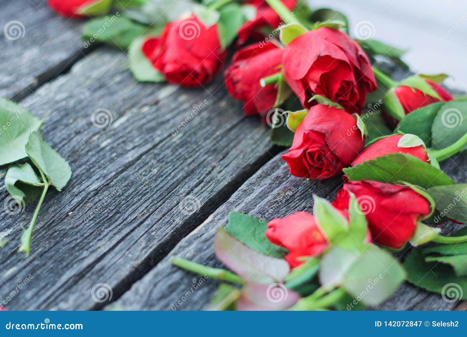 Besnoeiings rode vernietigde rozen donkere achtergrond, bloemen