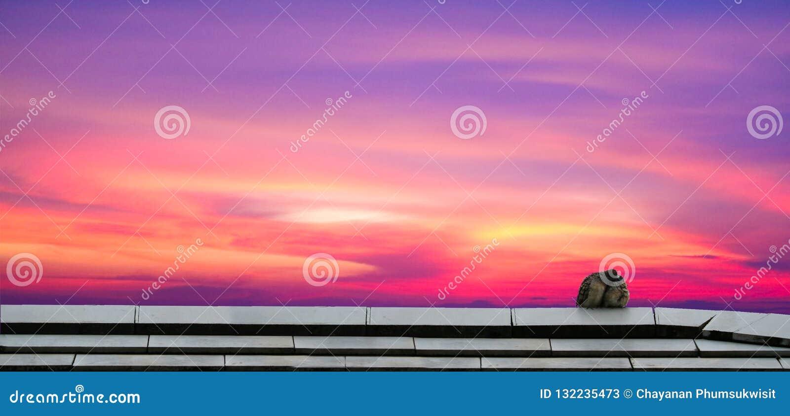 Beso de dos pájaros en el tejado y el cielo y la nube coloridos del panorama en el sol