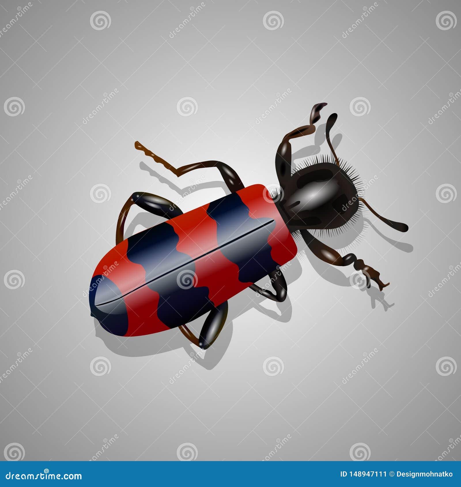 Besouro vermelho e preto real?stico