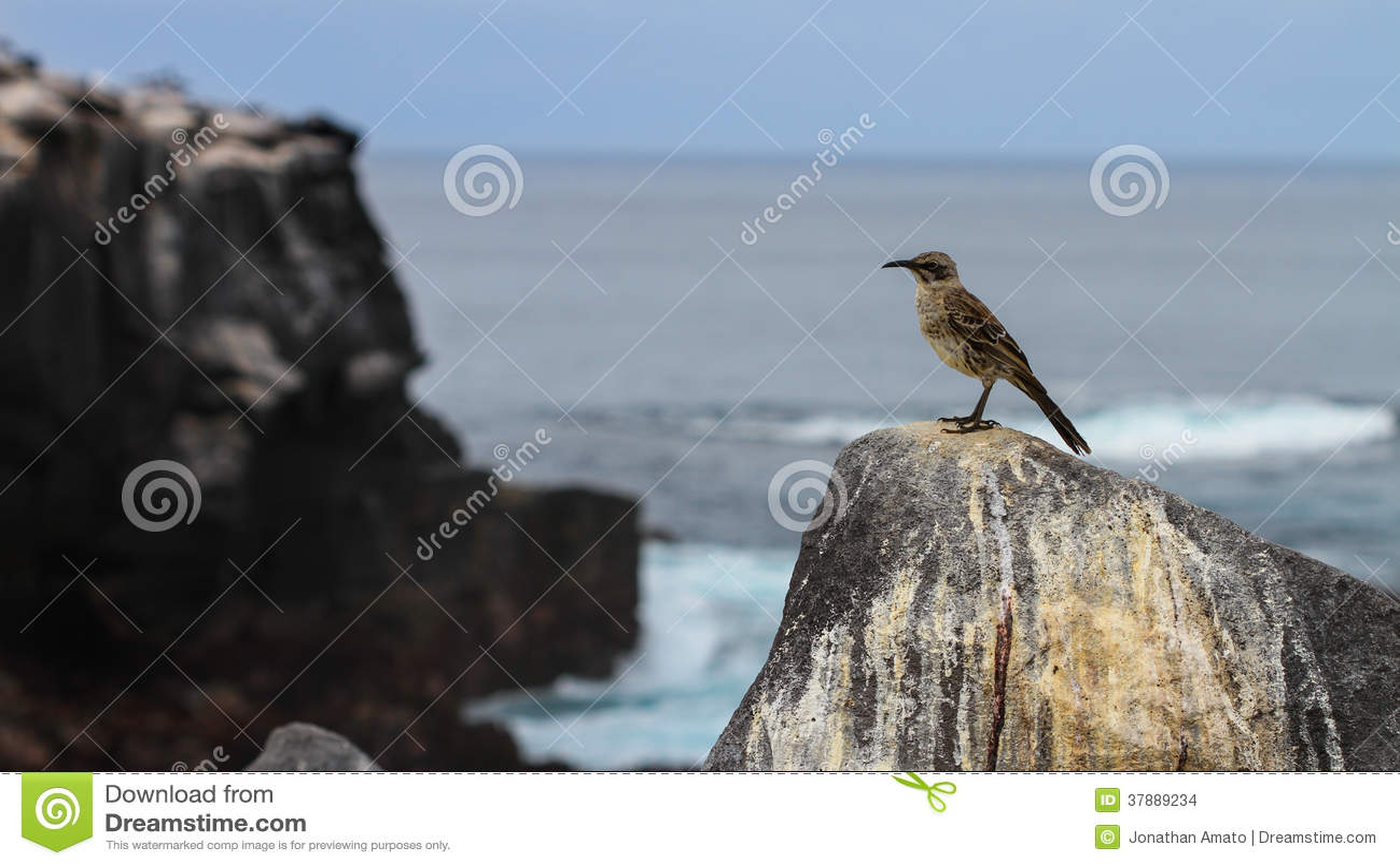 Bespottende Vogel