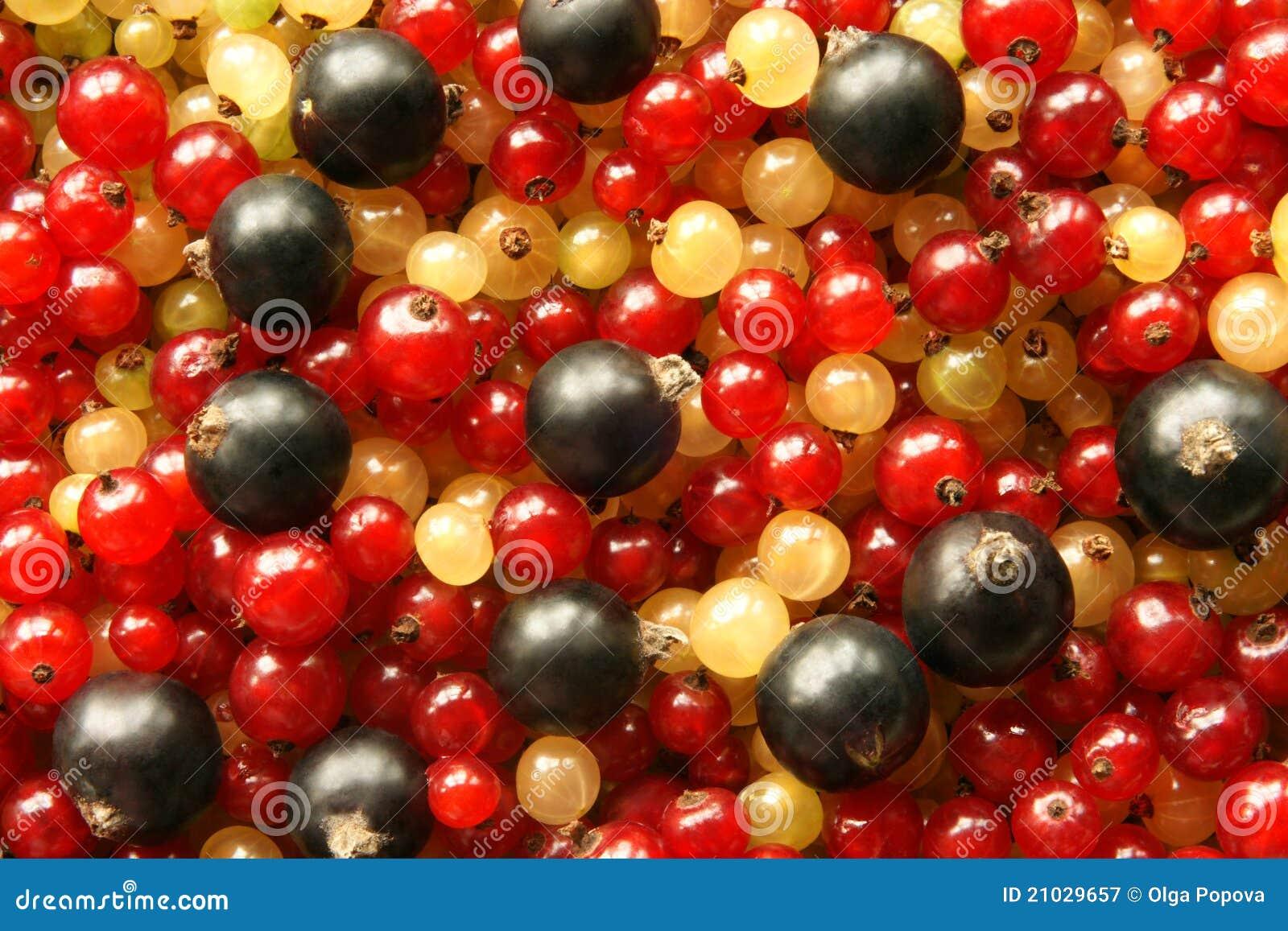 Bessen van zwart rood en witte aalbes stock afbeelding afbeelding 21029657 - Eetkamer rood en zwart ...