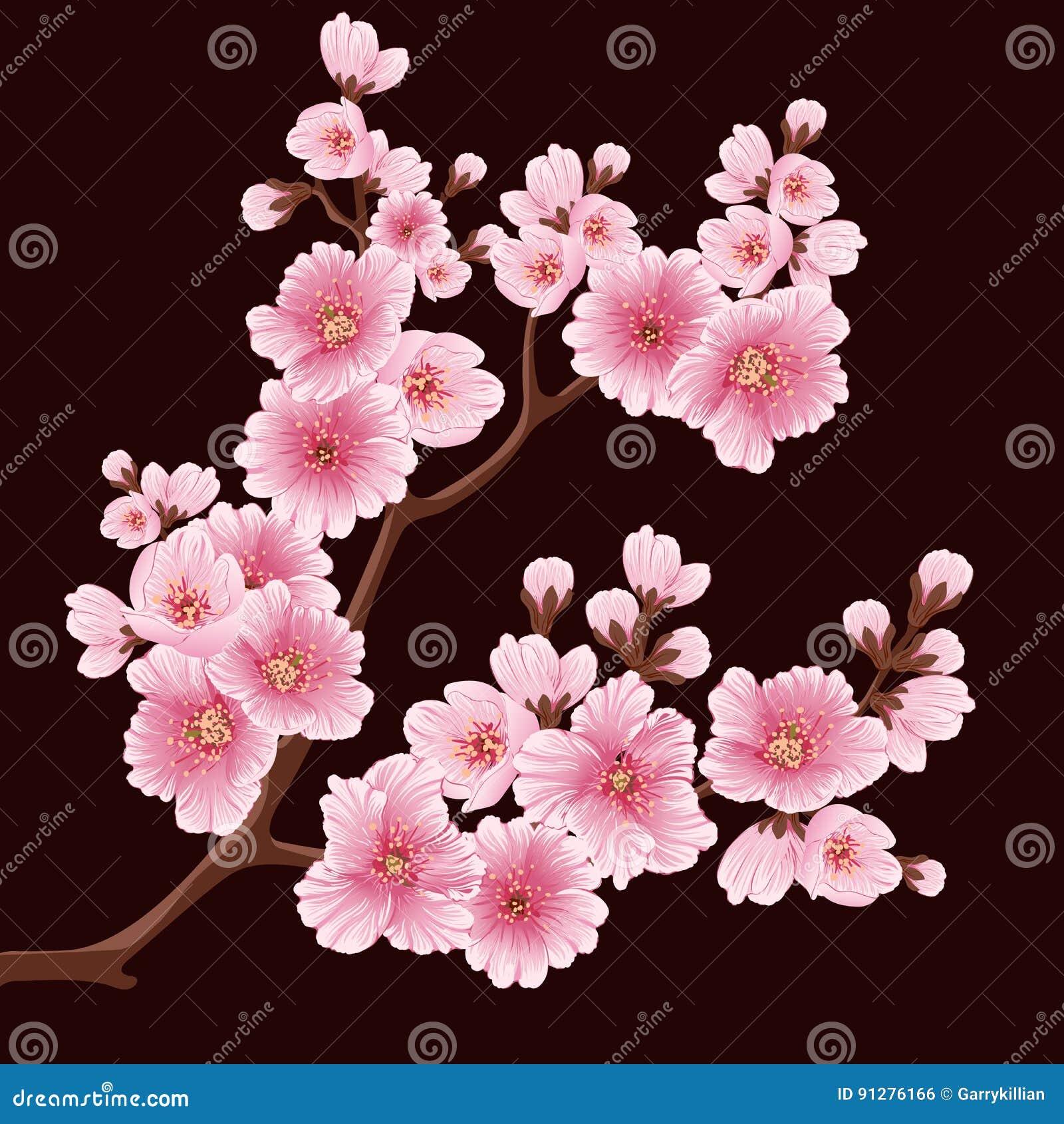 Beståndsdel för filial för vektorsakura blomma Elegant beståndsdel för din design Körsbärsröd blomning